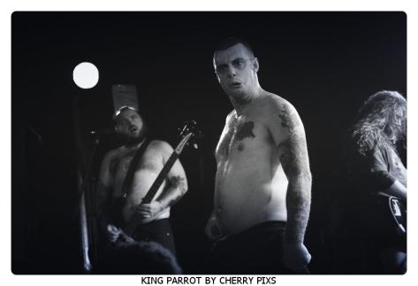 KING PARROT-08-BorderMaker
