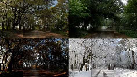 17David Hockney The Four Seasons Woldgate Woods 2010-2011 36 vidéos numériques © David Hockney - Copie.jpg